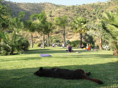 Yoga mit Ursula Kaiser